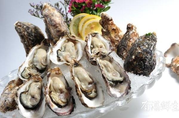 湛江生蚝批发|生蚝养殖场|湛江烤生蚝|净化蚝|生蚝|官渡生蚝|刺身生蚝|鲜活生蚝|